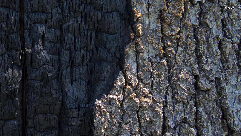 Half burned tree bark wallpaper   Photography wallpapers   360 1360x768