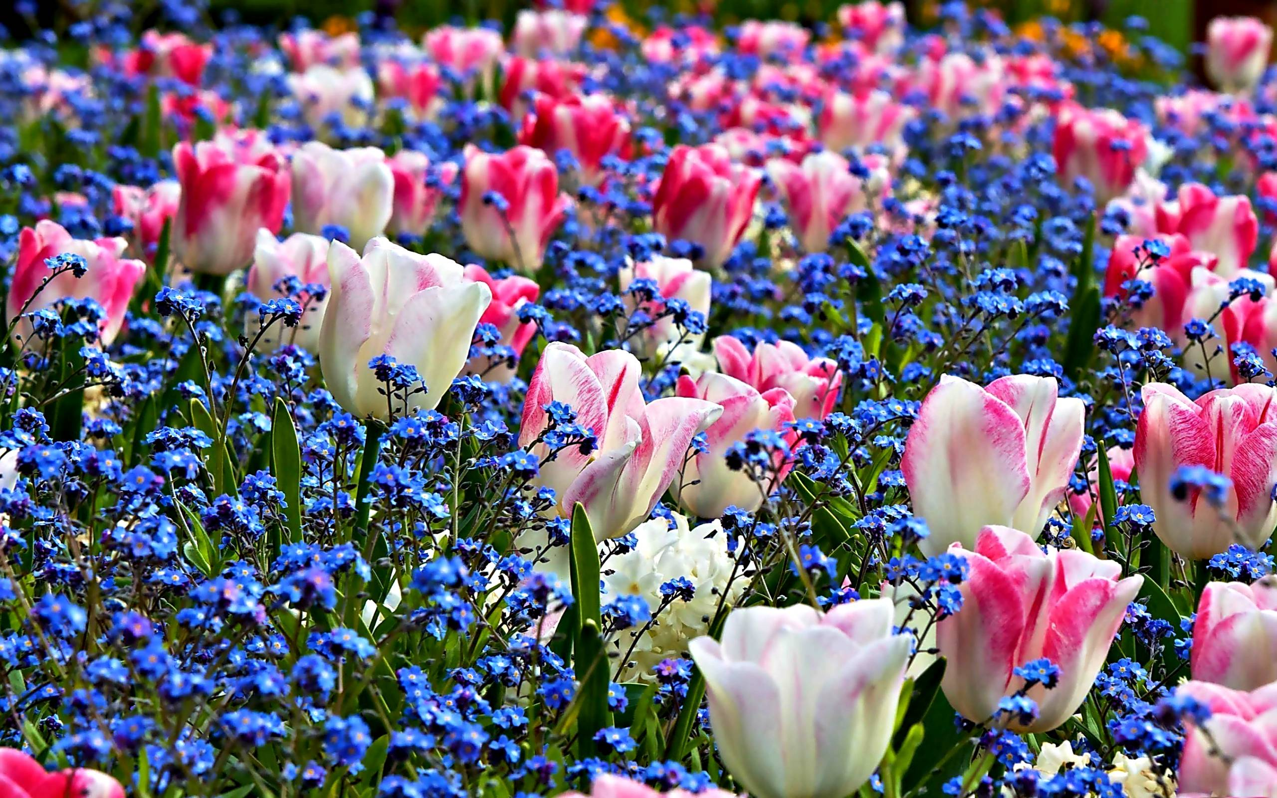 Spring Flowers Backgrounds HD 2560x1600