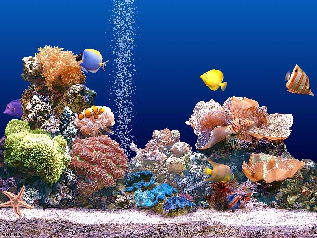 Coral reef wallpapers wallpapersafari - Great barrier reef desktop background ...