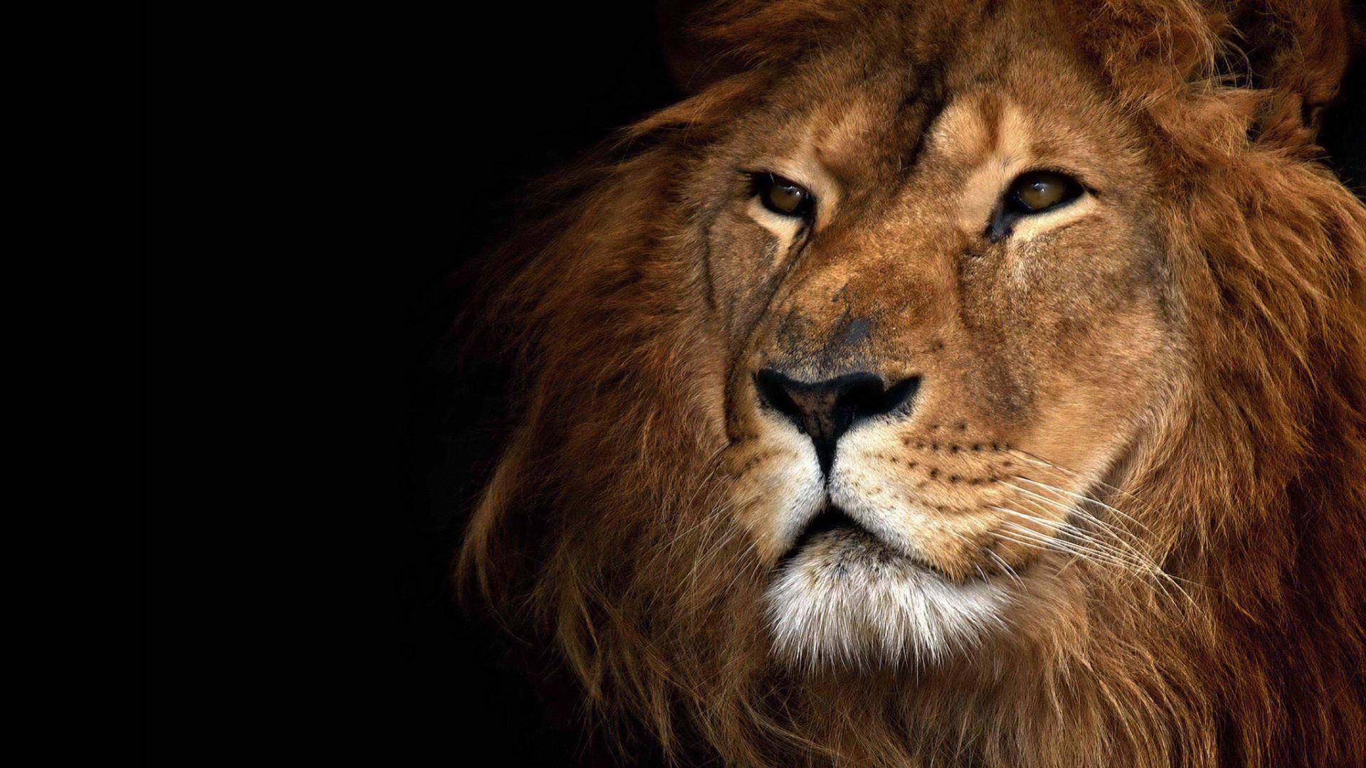 Lion Roaring Desktop Wallpaper 23848 Hd 1920x1080