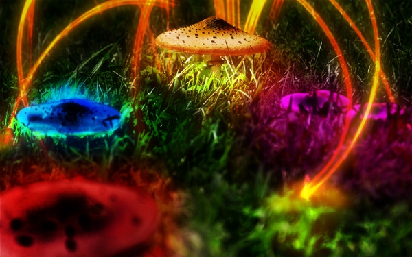 multicolor mushrooms plants psychedelic digital art photomanipulations 600x375
