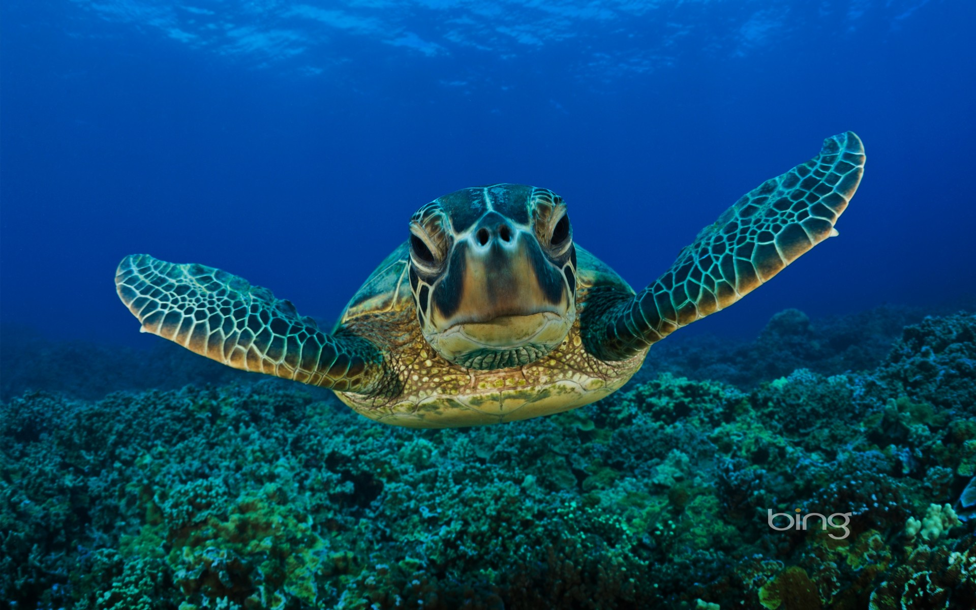 Green Sea Turtle 2   Animals Wallpaper 26859642 1920x1200