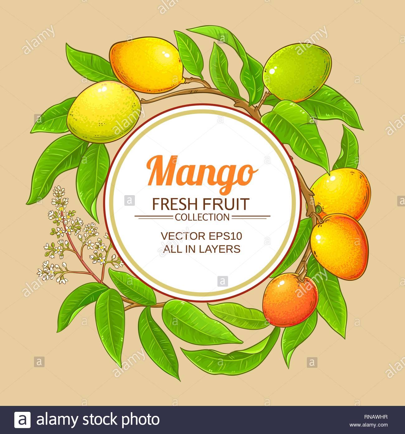 mango vector frame on color background Stock Vector Art 1300x1390