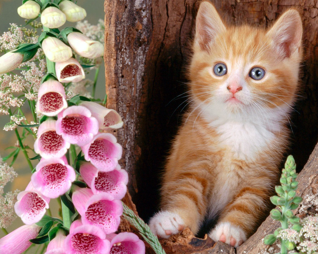 All Wallpapers Beautiful Cats Hd Wallpapers 1280x1024