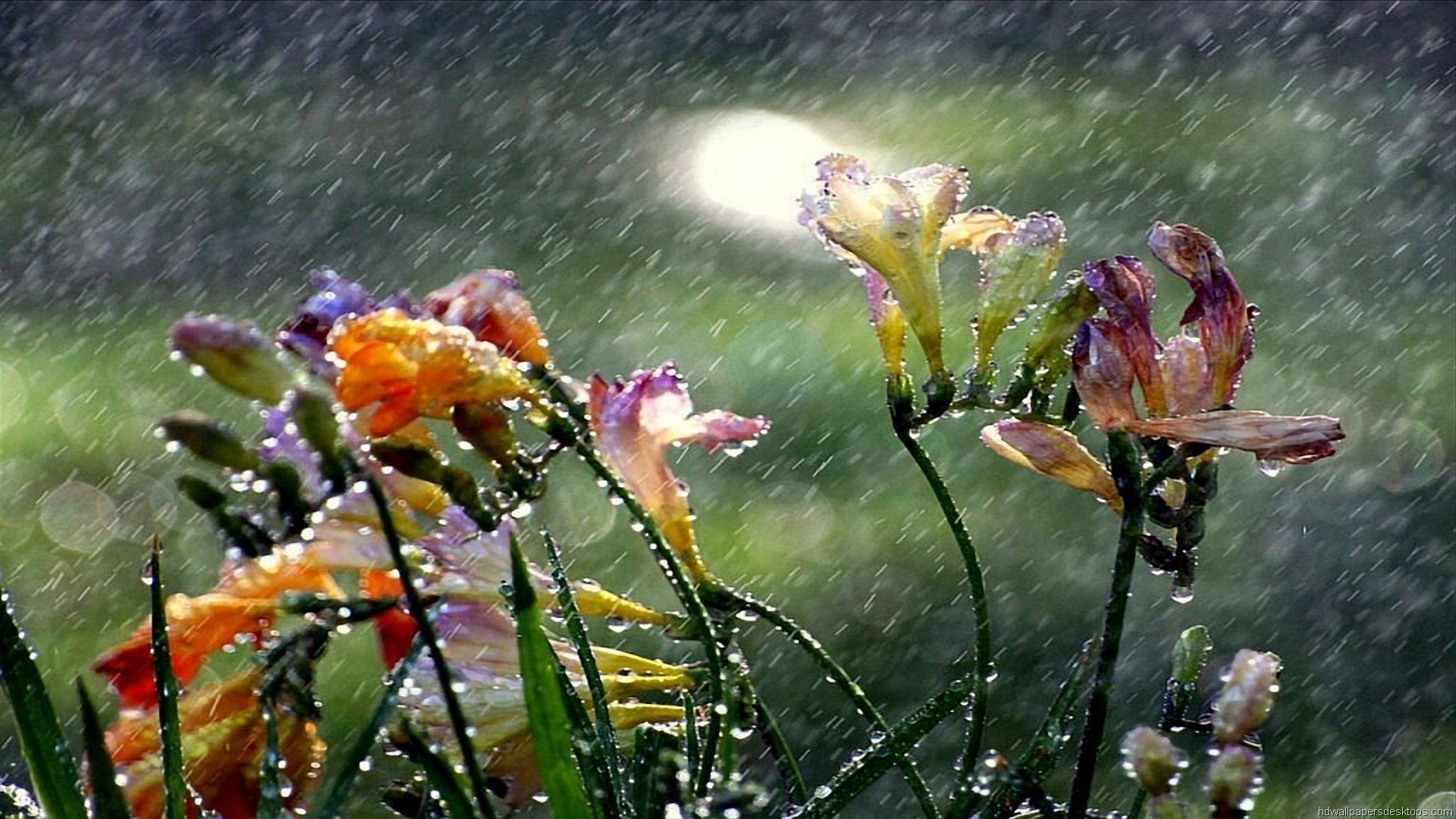 Rainy Spring Day Wallpaper Wallpapersafari
