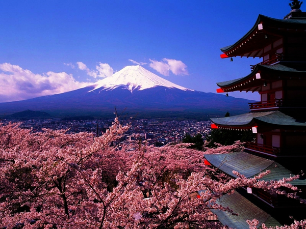 Free Download Japan Mountains Mount Fuji Cherry Blossoms