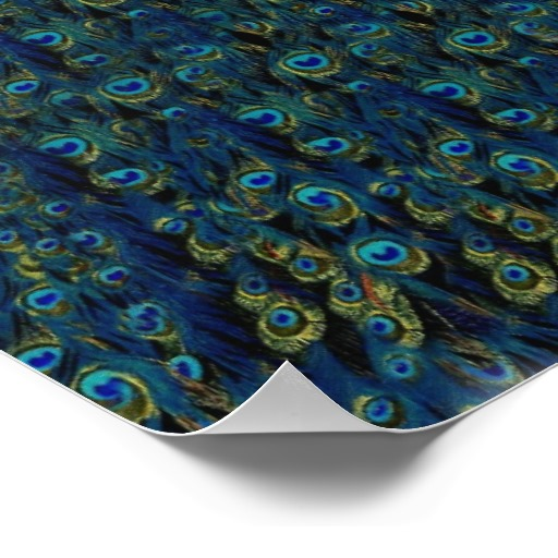 Vintage Pretty Peacock Bird Feathers Wallpaper Posters Zazzle 512x512