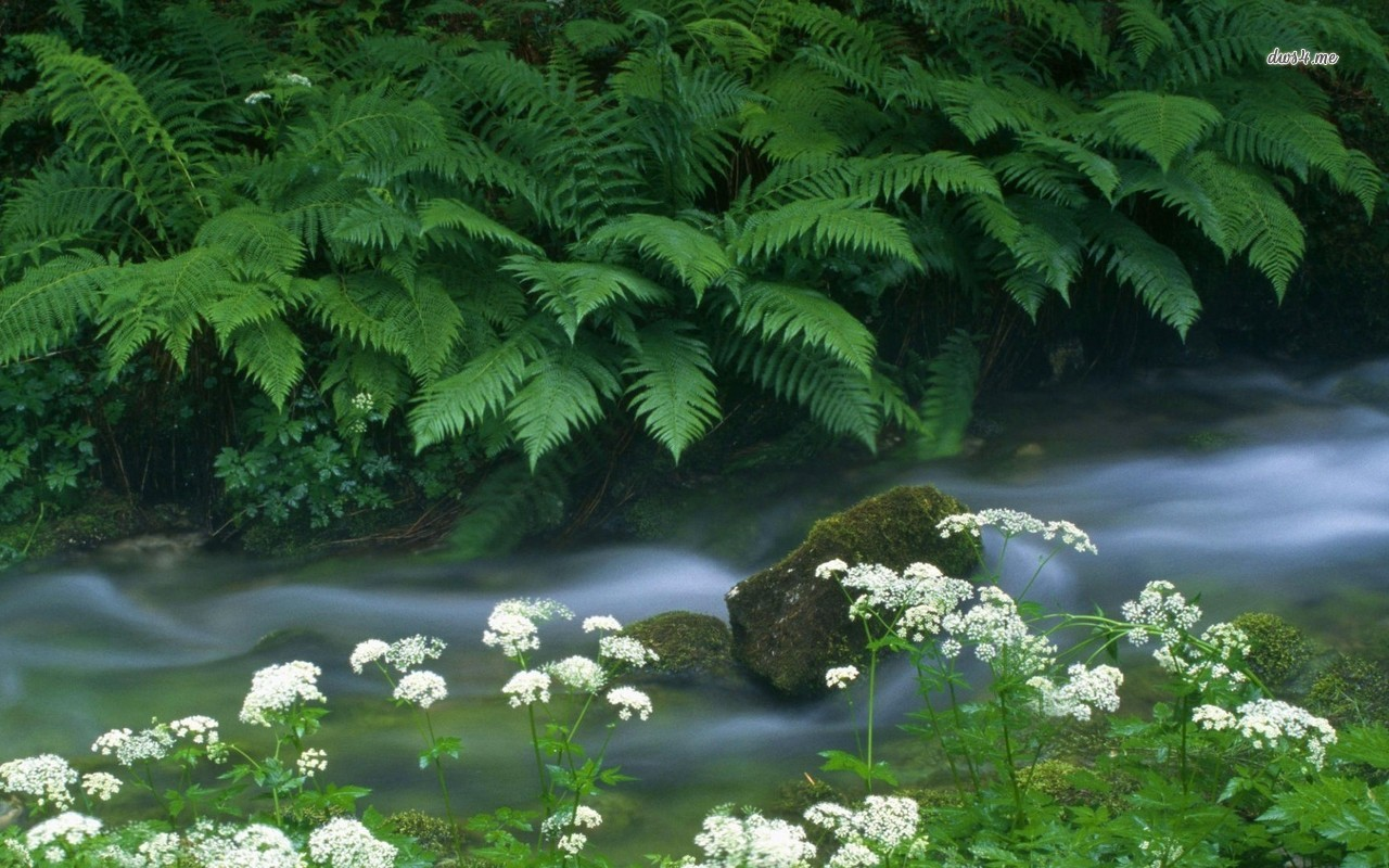 Fern near the creek wallpaper   Nature wallpapers   10183 1280x800