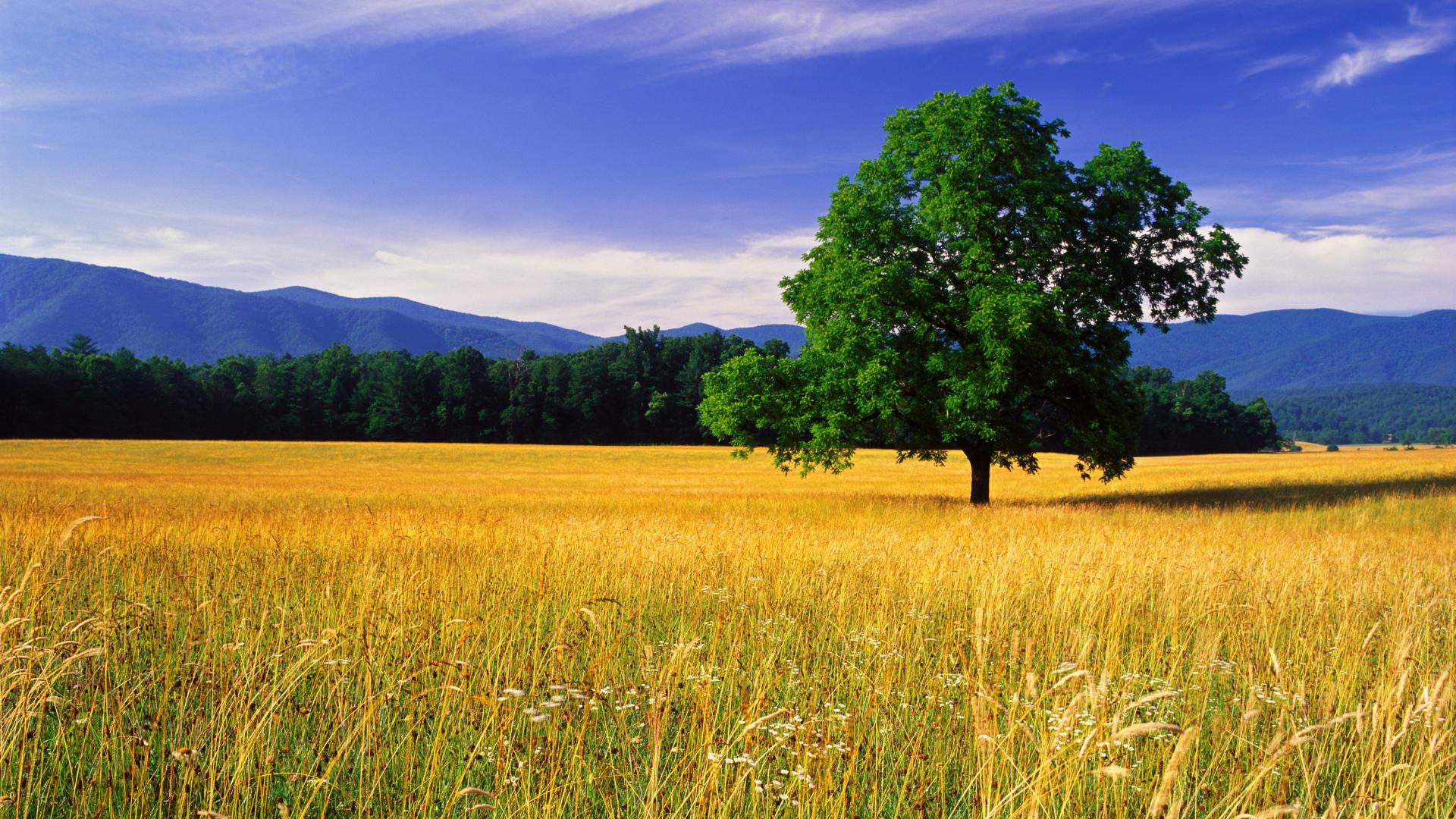 nature landscape beautiful photos best desktop landscape hd wallpapers 1920x1080