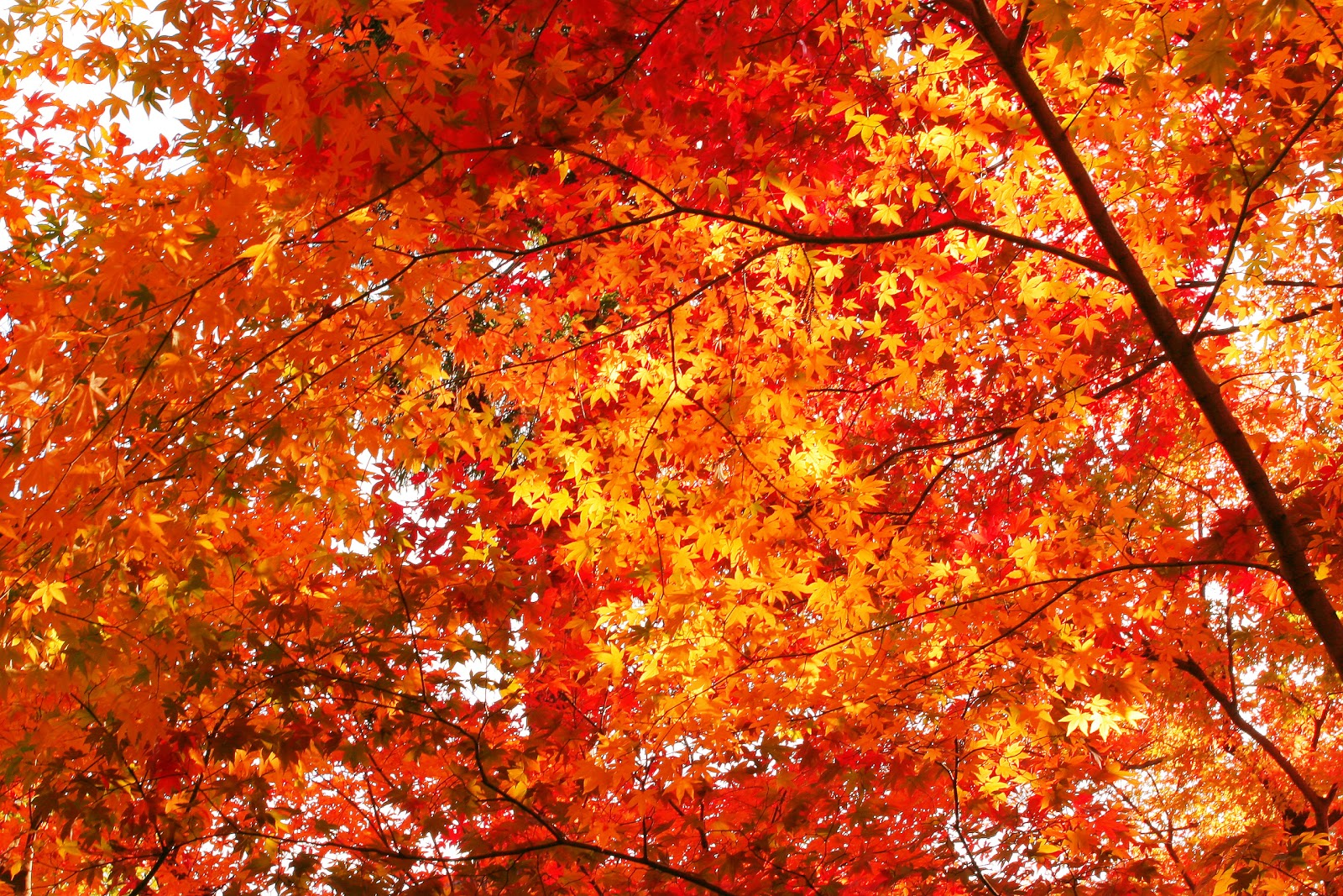 Autumn Leaves 1600x1067