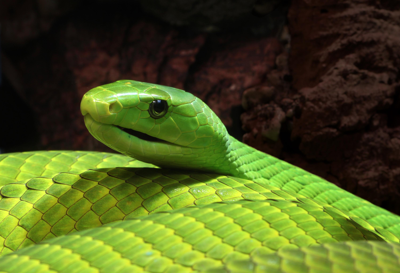 Tag Archives Venomous snake 3000x2054