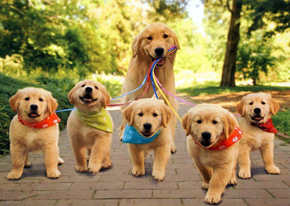 960x681px Puppy Wallpapers Free Download Wallpapersafari
