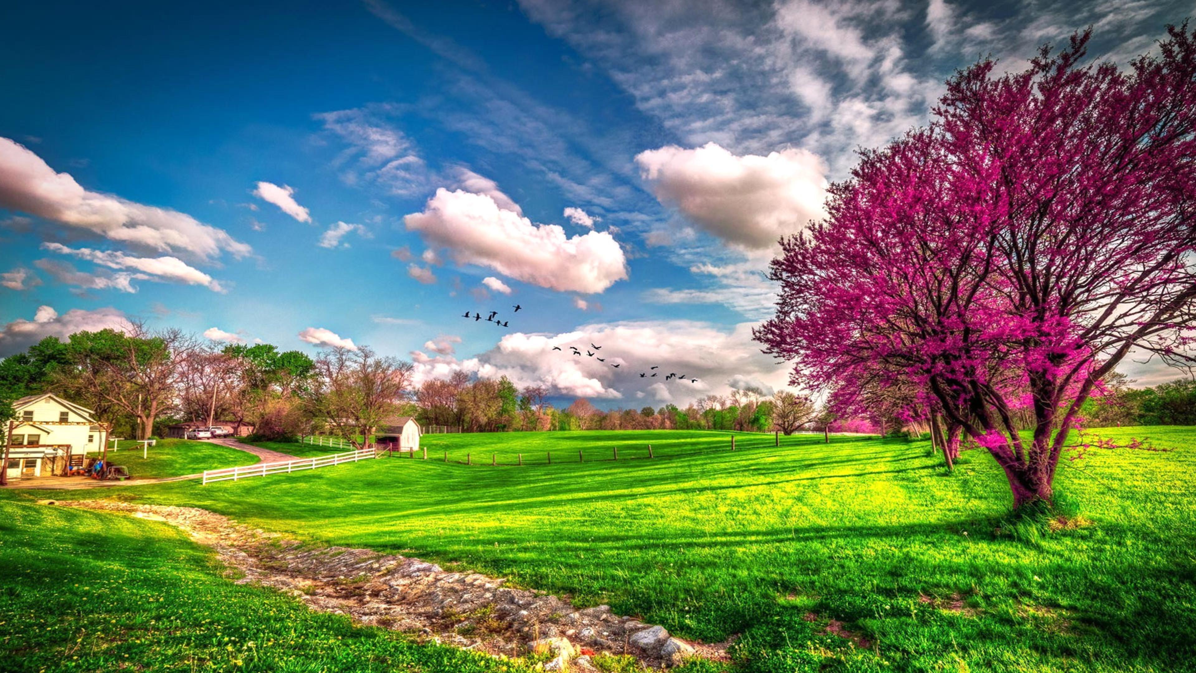 Landscape beautiful spring nature   HD wallpaper Wallpaper 3840x2160