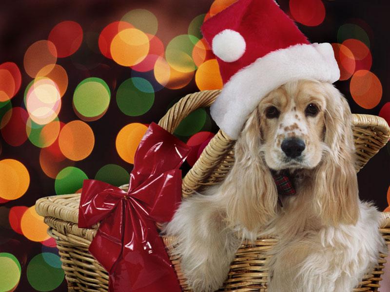 christmas christmas Wallpapers christmas Pictures christmas Gifts 800x600