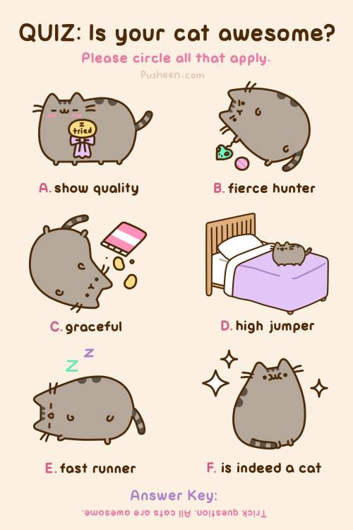 Pusheen cat what is your cat like comment 500x750