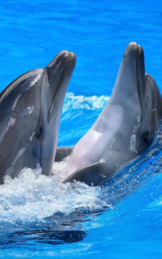 Dolphins Live Wallpaper   Android Apps on Google Play 562x900