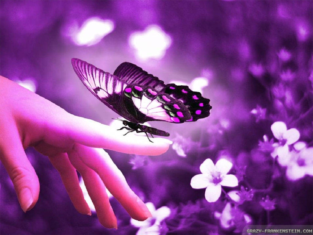Beautiful butterflies and flowers wallpapers wallpapersafari - Flower wallpaper dp ...
