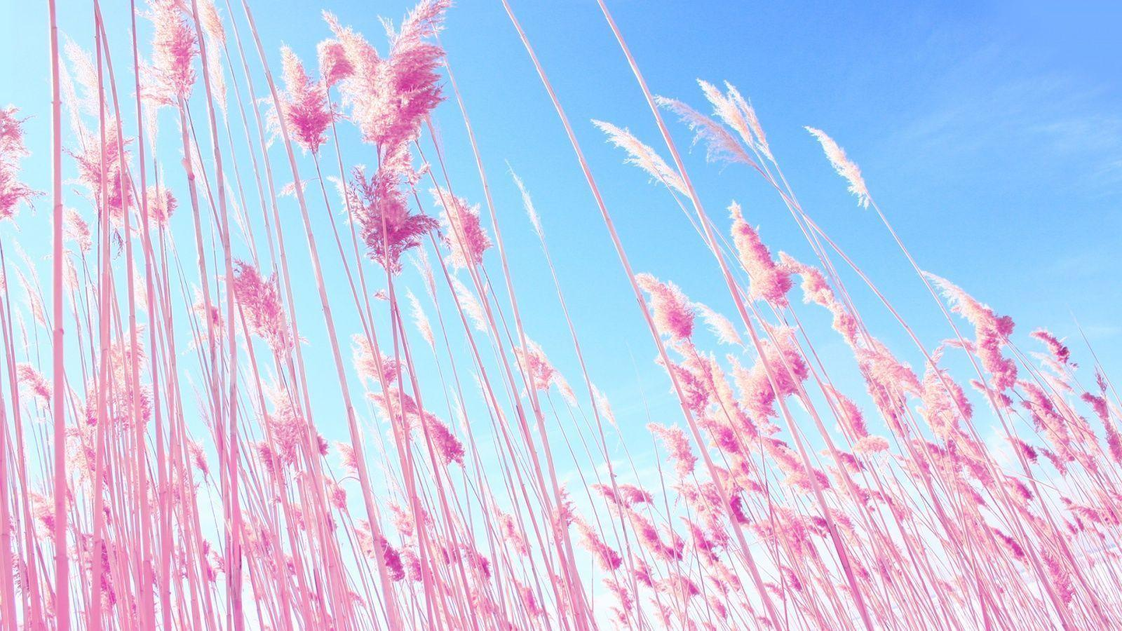 Pink Desktop Backgrounds 1600x900