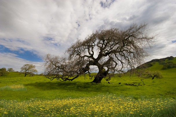 Spring Dance   Traveler Photo Contest 2012   National Geographic 608x405