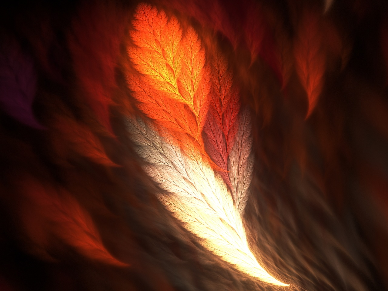 Awesome Feathers HD Wallpaper Download 1280x960