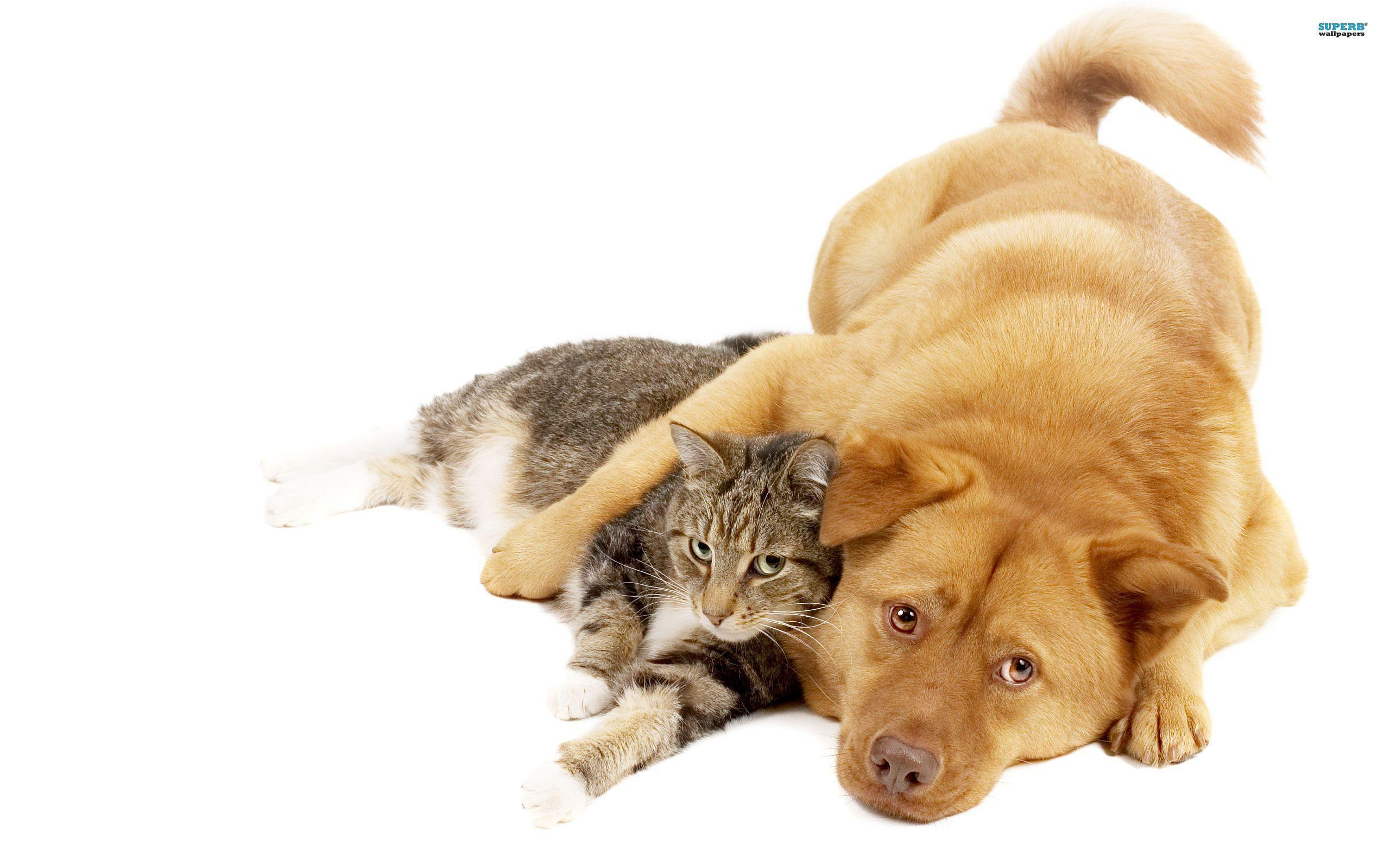 Cats And Dogs Wallpapers 2560x1600