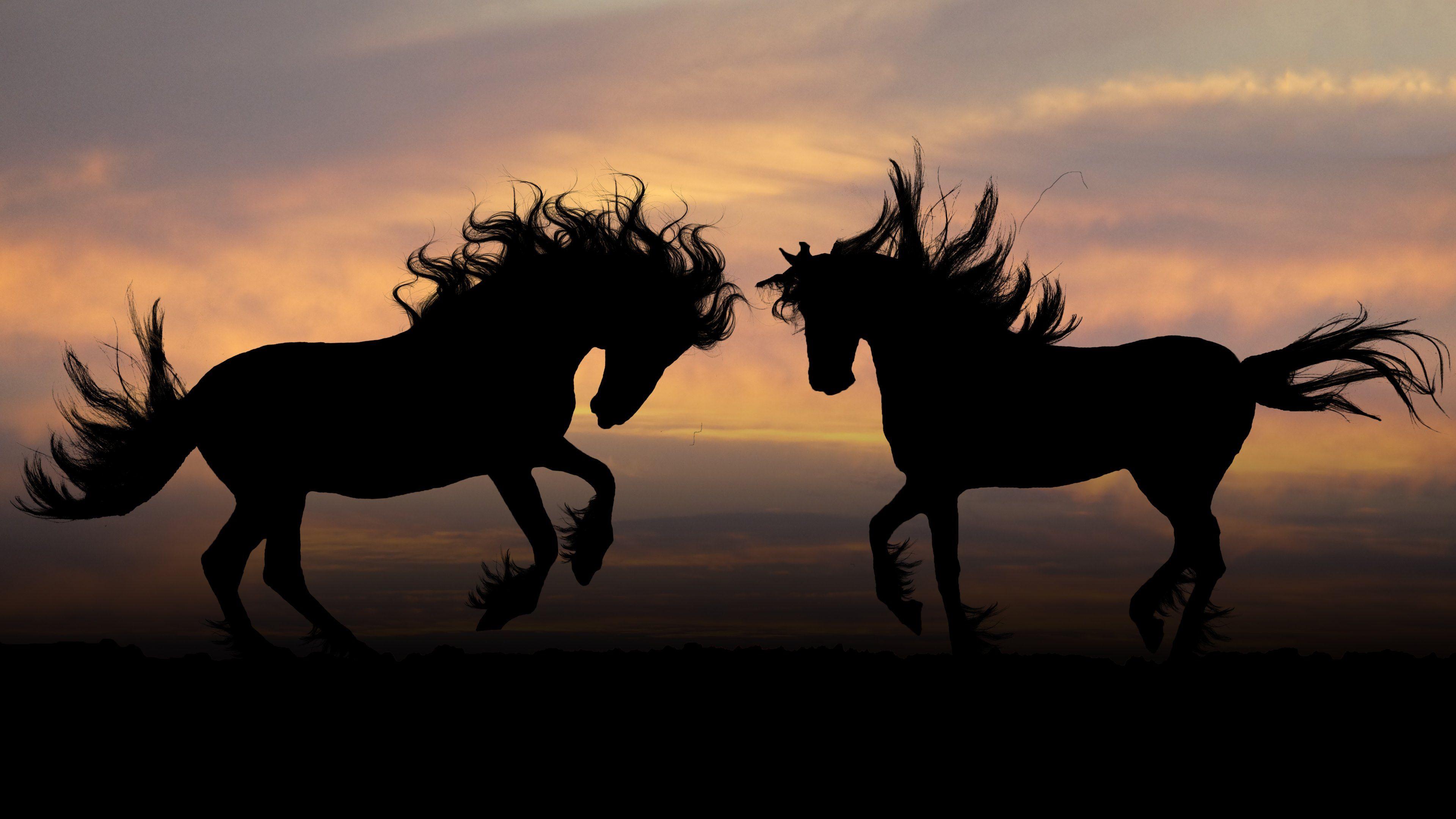 Horse 4K Ultra HD Wallpaper Horse Silhouettes HD Wallpapers 4K 3840x2160