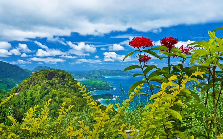 Pics Photos - Tropical Desktop Background Of Flower Wallpaper