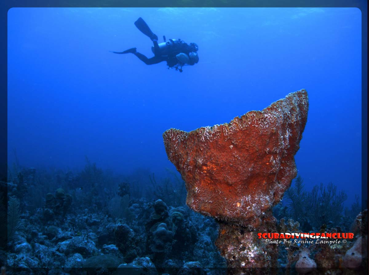 Freediving Wallpaper Related Keywords Suggestions   Freediving 1200x894