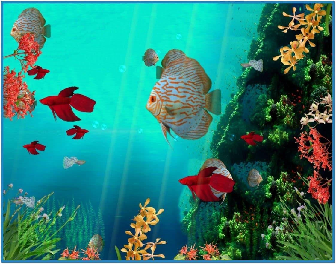 движущаяся картинка с рыбками на телефон видно фото, нижняя