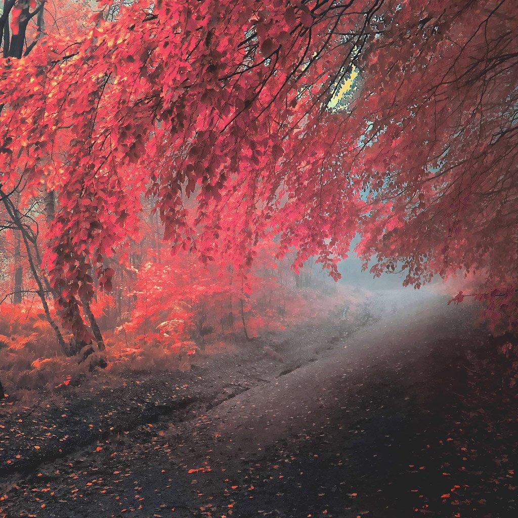 freeios7 apple wallpaper autumn leaves fall ipad retina parallax Car 1024x1024