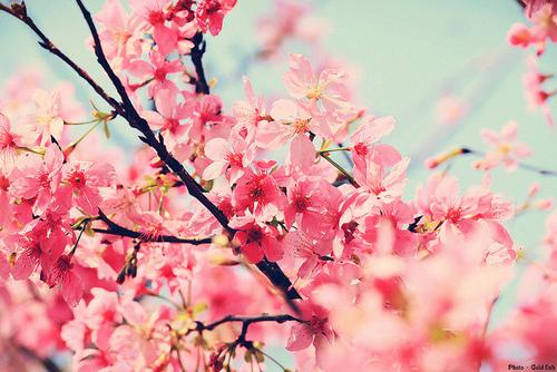 flowersfloral 500x334