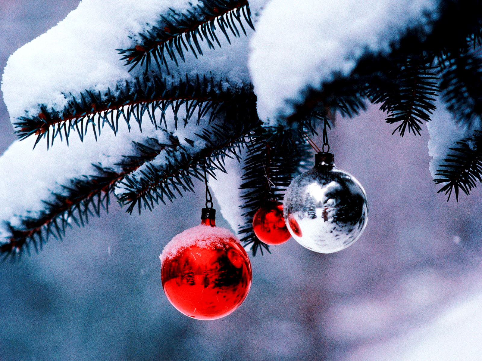 Christmas Tree HD Wallpapers Download Wallpapers in HD for your 1600x1200