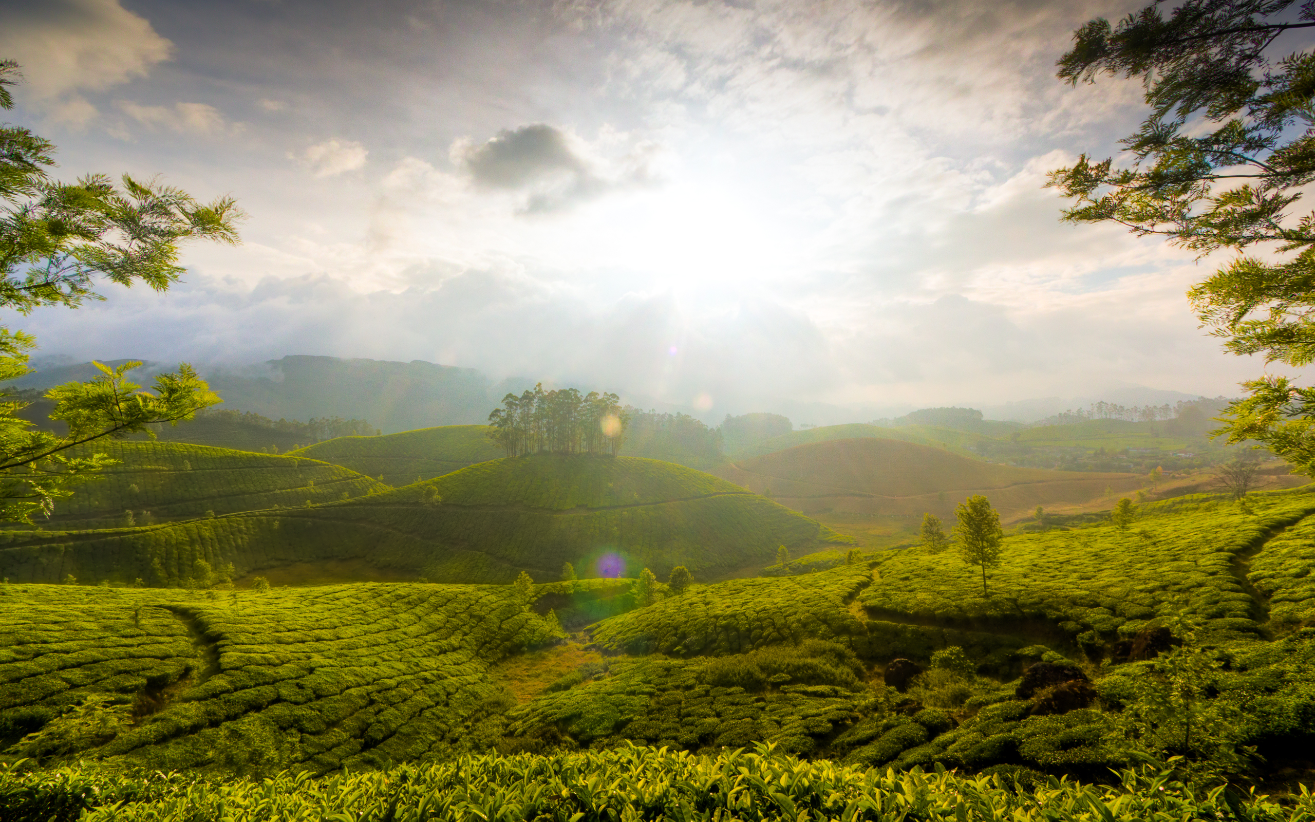 Munnar Hills Kerala India Wallpapers HD Wallpapers 2560x1600