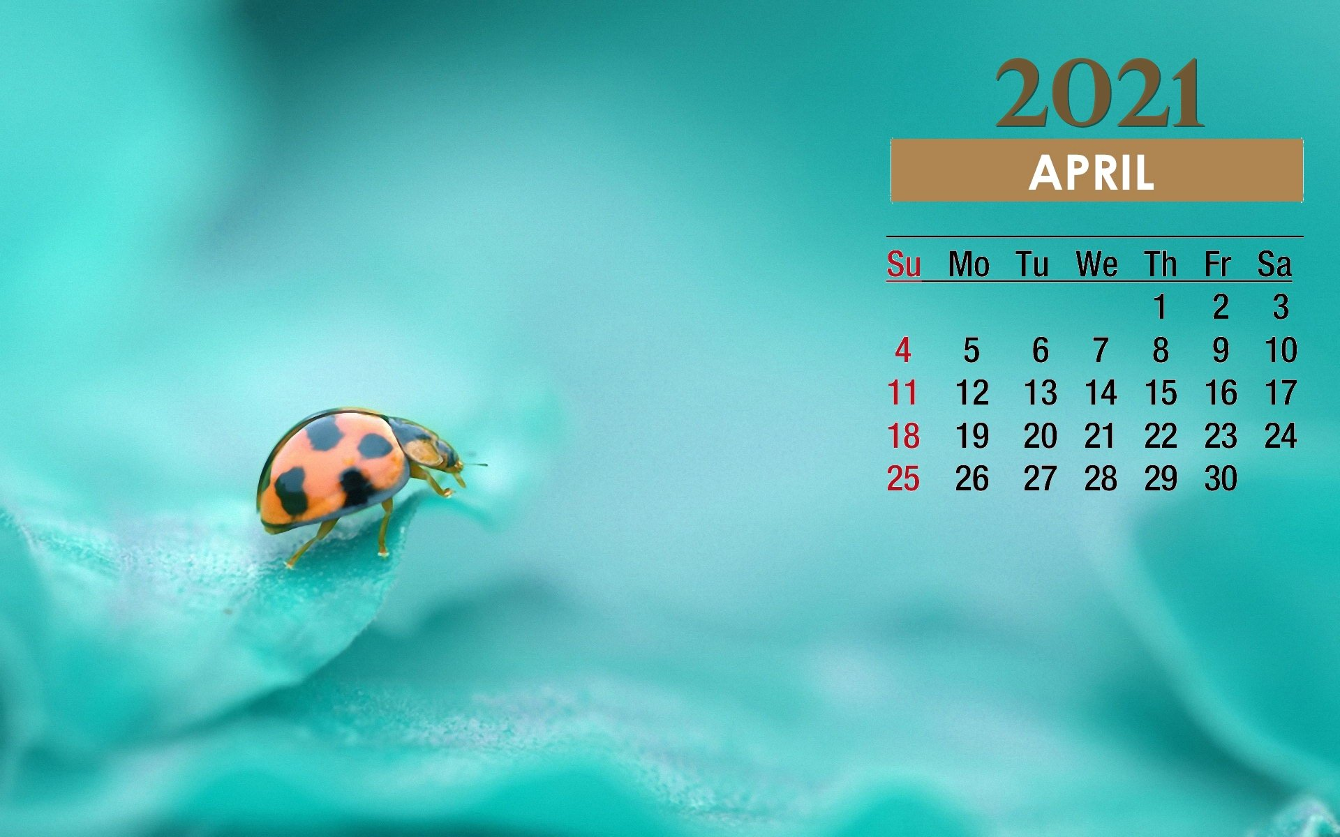 April 2021 Calendar Beetle Wallpaper 72162   Baltana 1920x1200