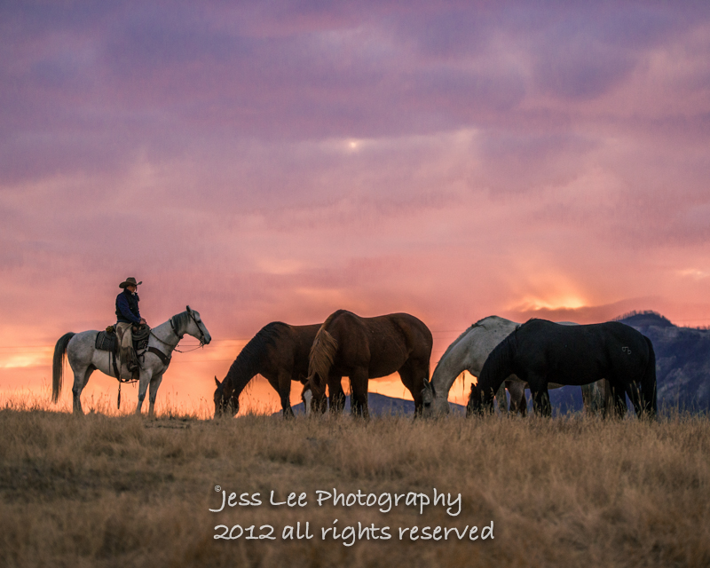 Cowboys Horses Wild Nature Widescreen Background Picture Hd Wallpaper 800x640