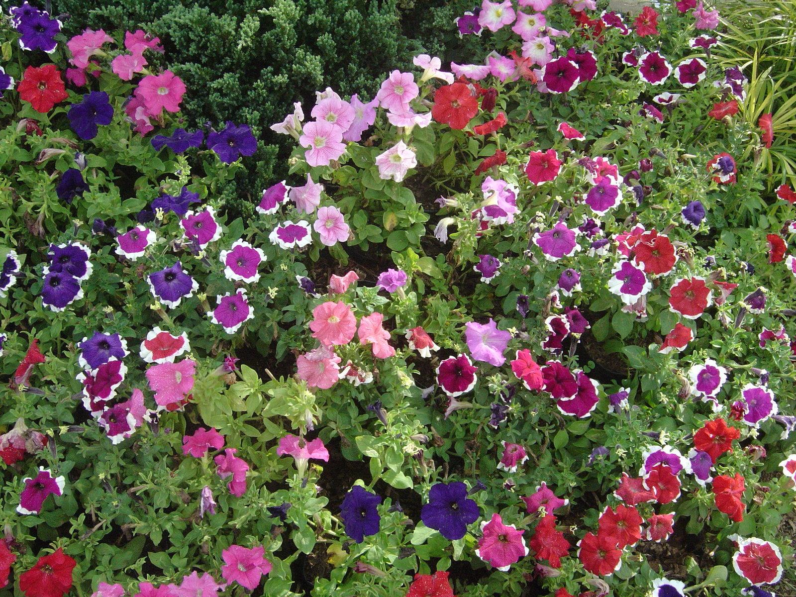 Tropical flower garden wallpaper Views 177 1600x1200