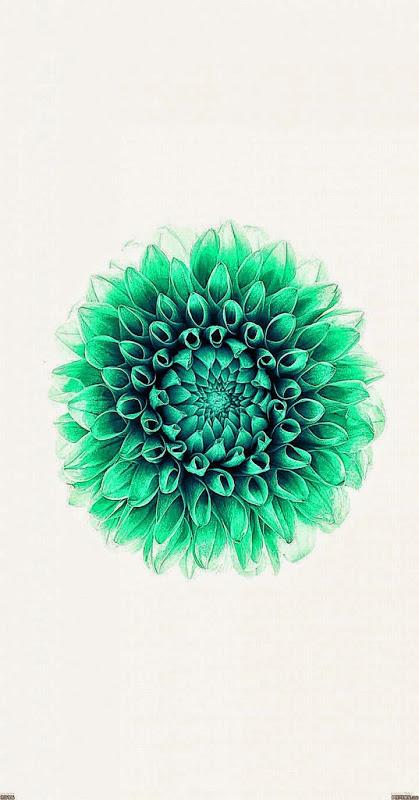 ios 8 flower wallpaper wallpapersafari