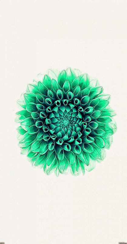 Flowers Ios 8 Wallpaper Mega Wallpapers 419x800