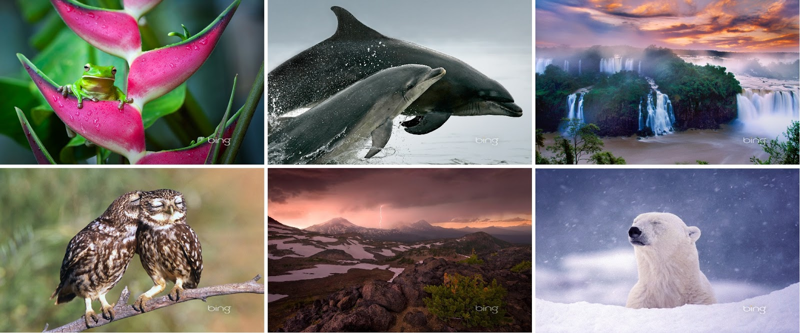 hd wallpapers of bing february collection 2013 bing updates wallpaper 1600x667