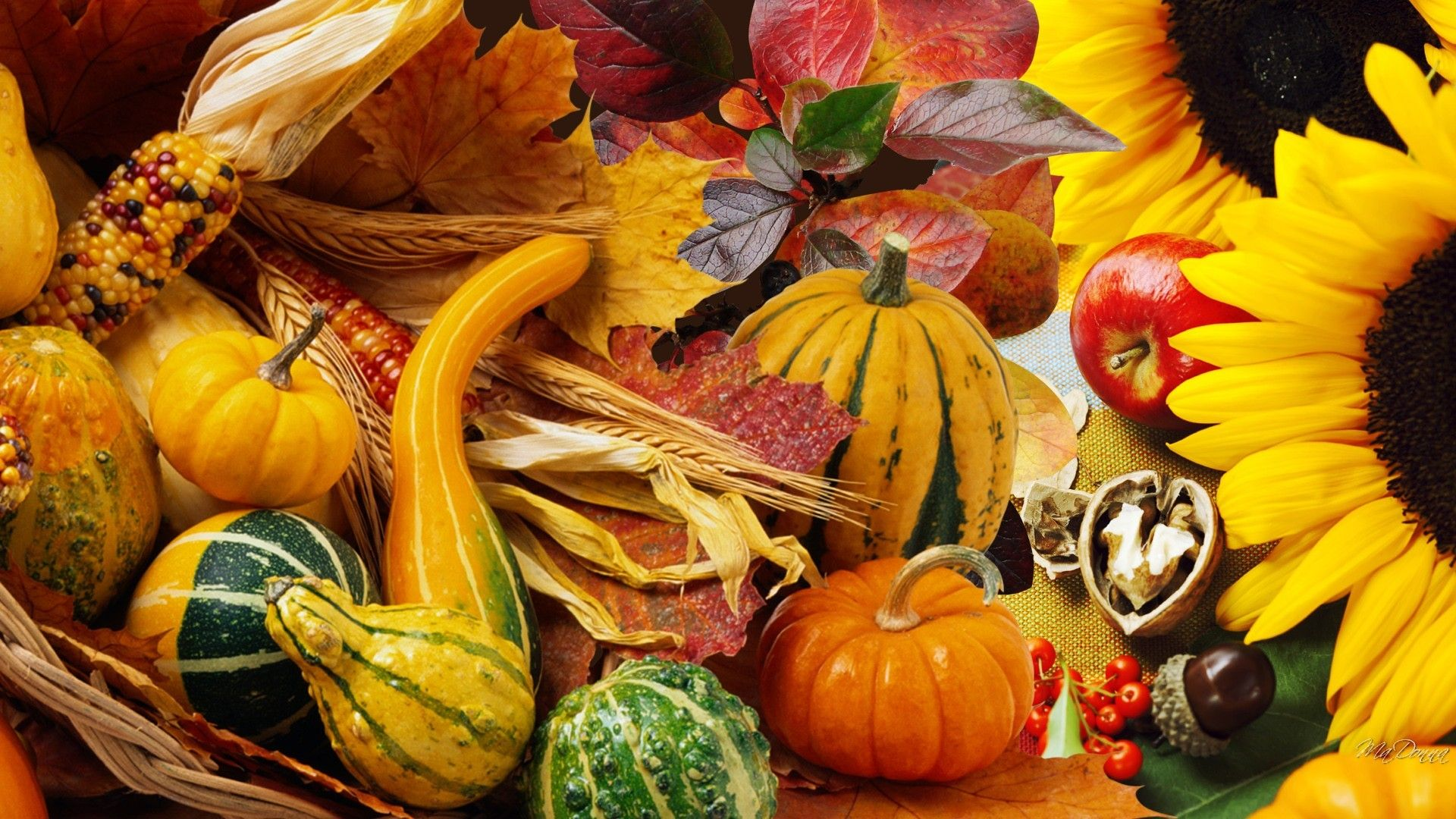 Thanksgiving Gourd Wallpapers   Top Thanksgiving Gourd 1920x1080