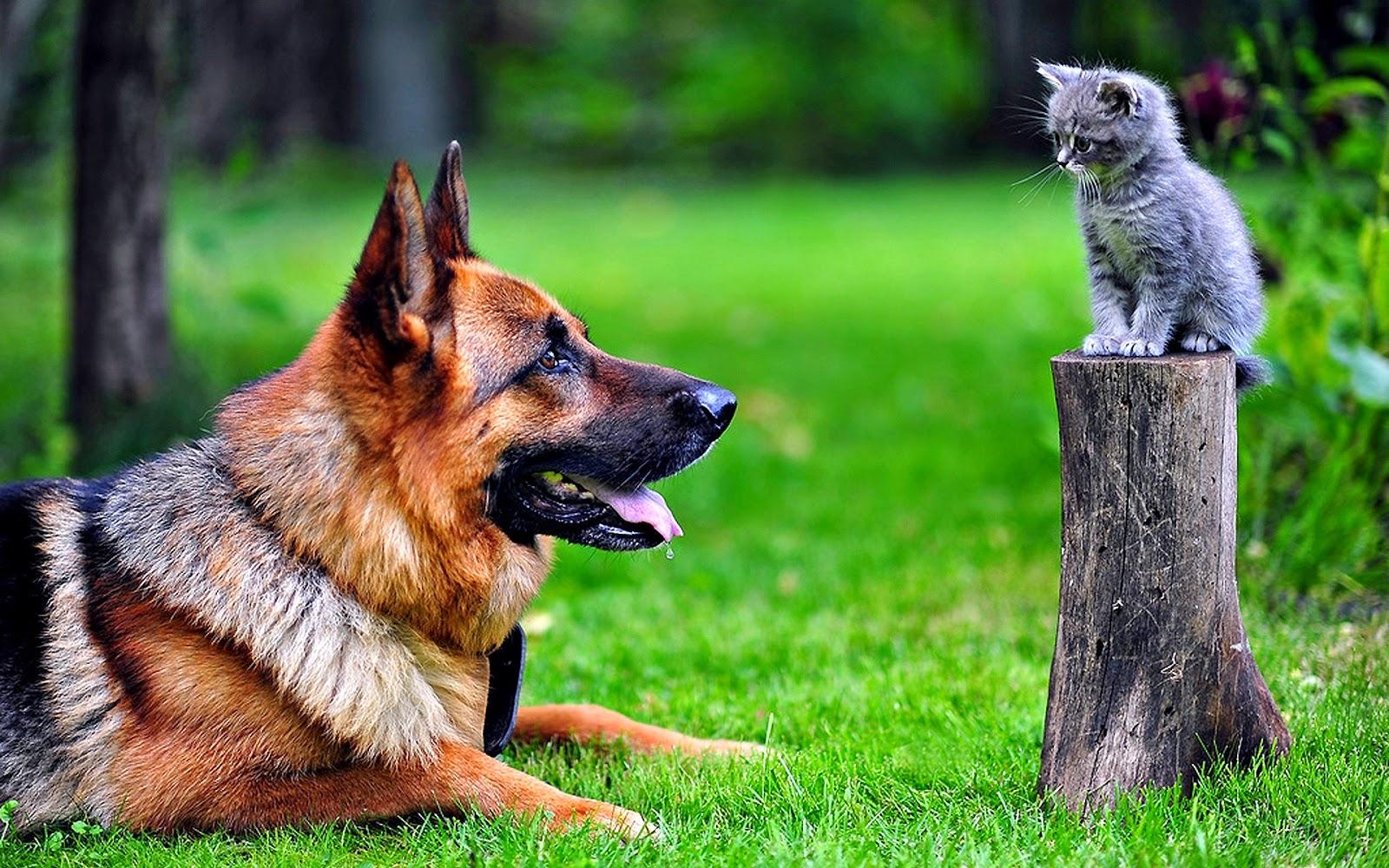 Dog and Cat wallpapers   HD Wallpapers   High Quality 1600x1000