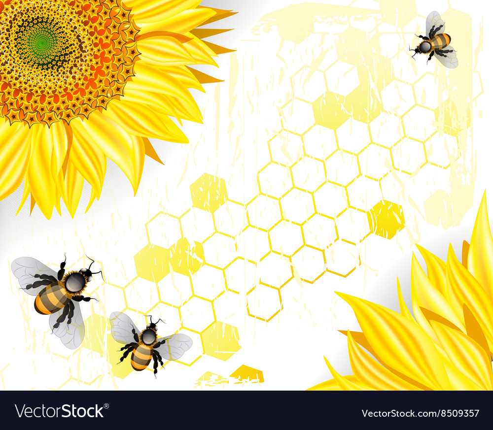 Sunflowers and Bees on a Crisp White Background Vector Image 1000x873