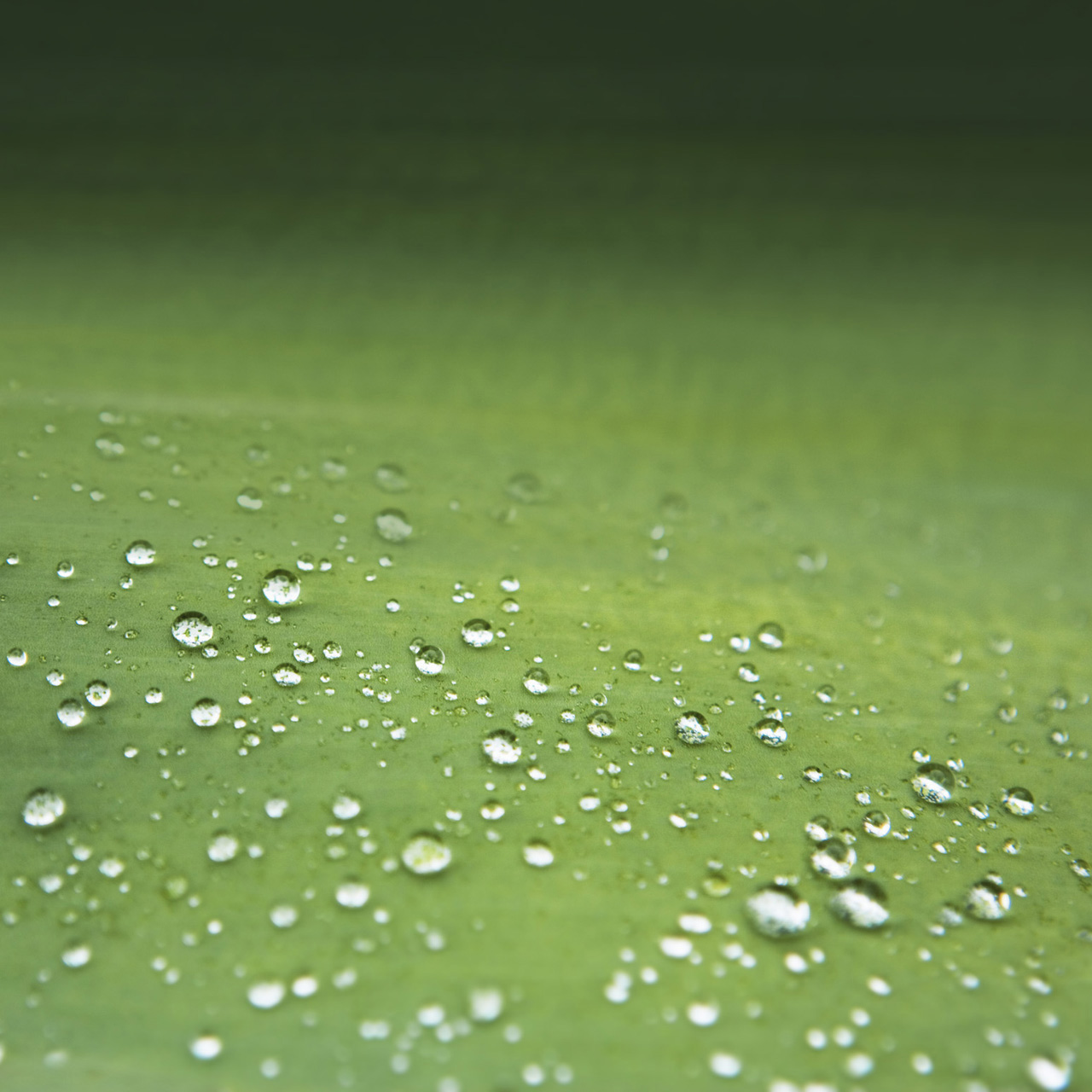 Free Download Galaxy S3 Green Hd Wallpapers Galaxy S3 Green
