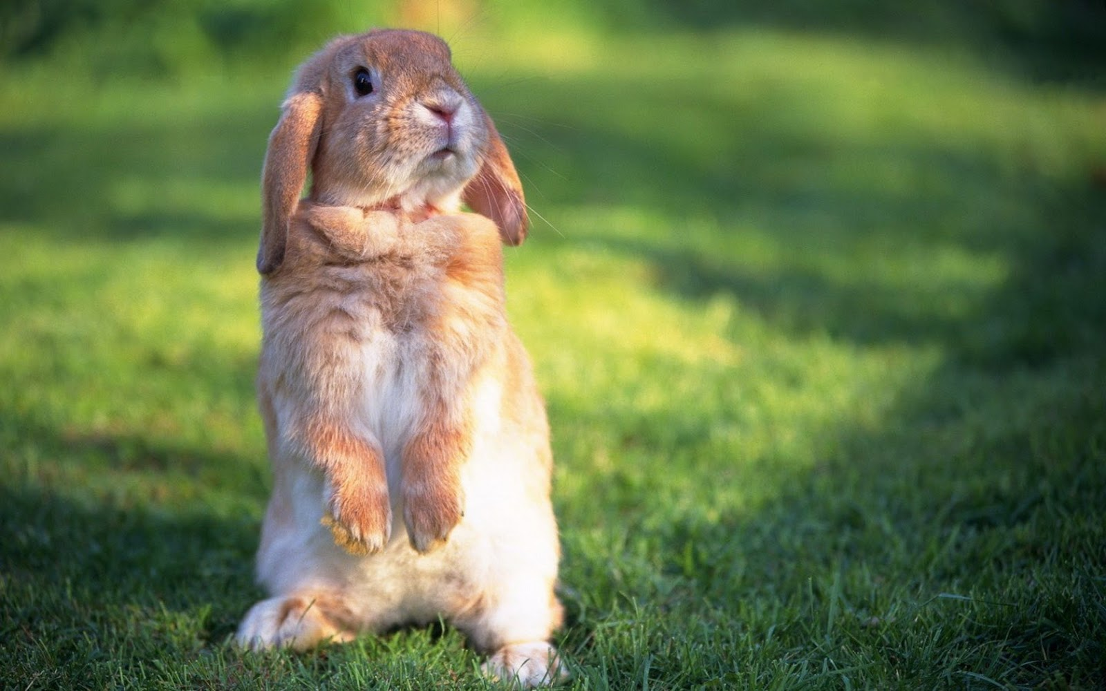 All Wallpapers Cute Rabbit hd Wallpapers 2013 1600x1000