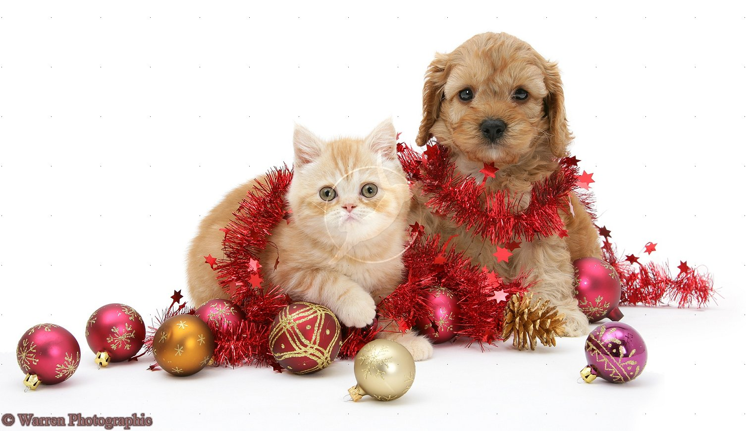 Cute Christmas Kittens And Puppies 9683 Hd Wallpapers in Celebrations 1506x870