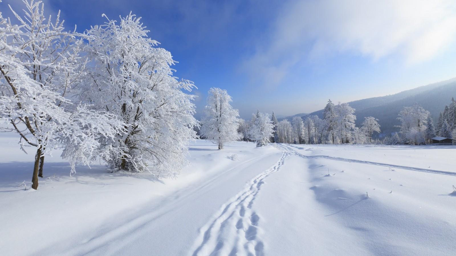 Snow Egypt Wallpaper Free Download