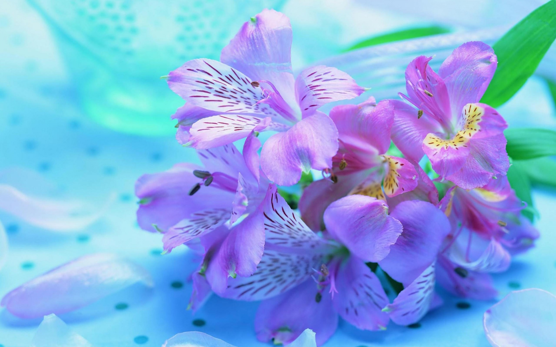 Flowers Pink Purple Widescreen Wallpaper Full HD Wallpapers 1920x1200