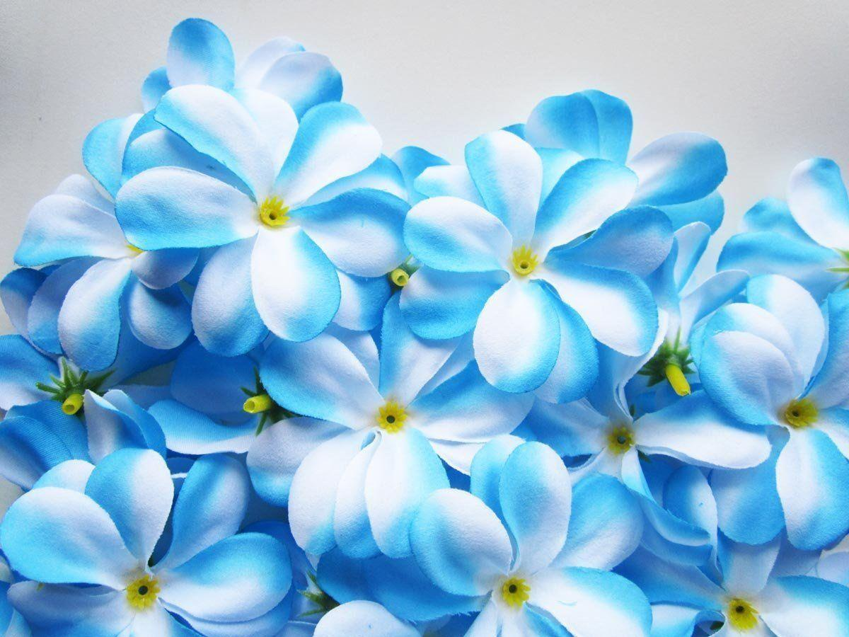 Blue Flowers Wallpapers 1200x900