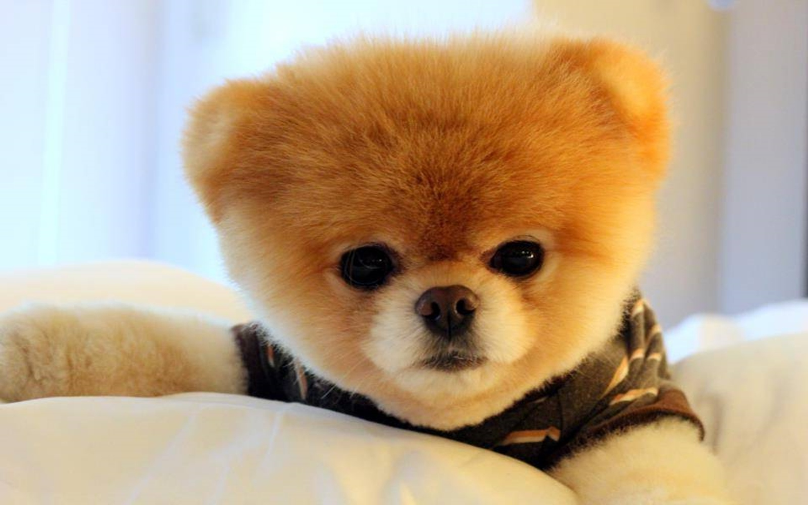 Boo The Cutest Dog Video
