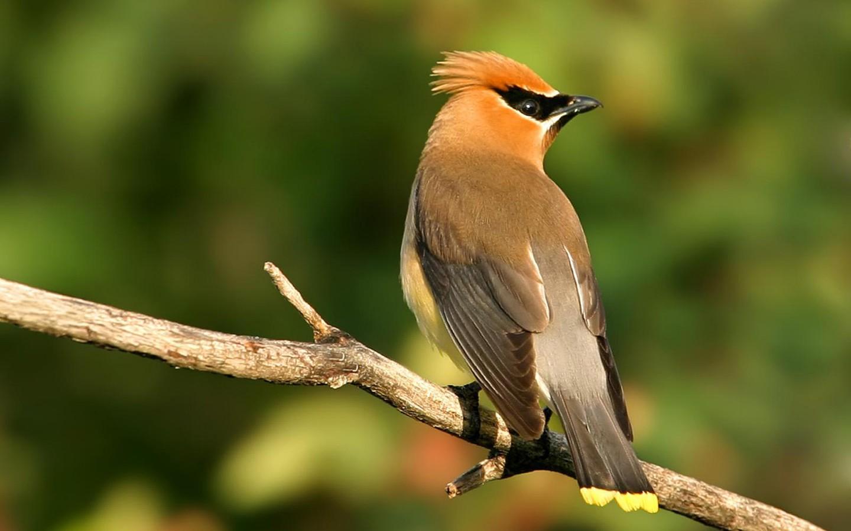 HD Wallpapers Nature 1080p Birds Nature Hd Birding Wallpaper 1440x900